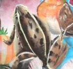 frog Rana temporalia