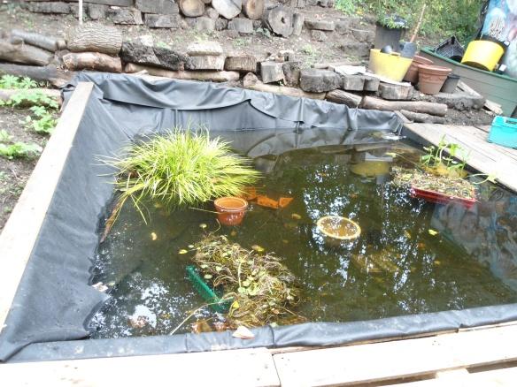pond with acorus