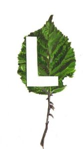 new leaf logo w. stalk