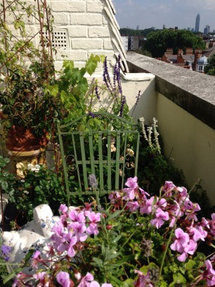 Pelargonium, rose & salvia on a tiny terrace.